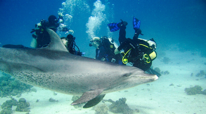 Дайвинг на Тарханкуте (Крым). Неожиданная встреча с дельфином